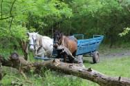Vă recomand să mergeți cu o căruță în Pădurea Letea