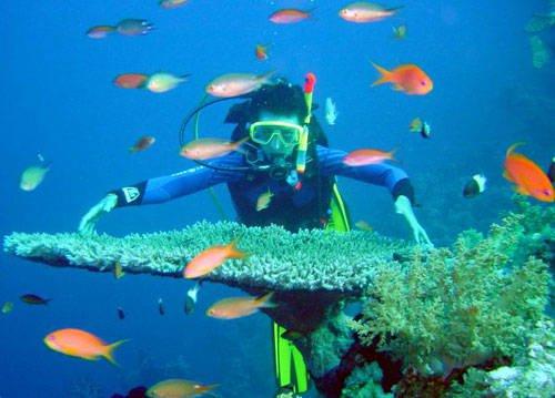 Hòn Mun vẫn là nơi nổi danh để lặn biển ở Nha Trang vì ở đây du khách có thể lặn xuống chiêm ngưỡng vẻ đẹp của hơn 300 loài san hô và cả ngàn loài cá đang sinh sống.