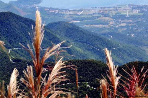 Đường lên đỉnh Bạch Mã