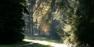 Arboretum of Tervuren