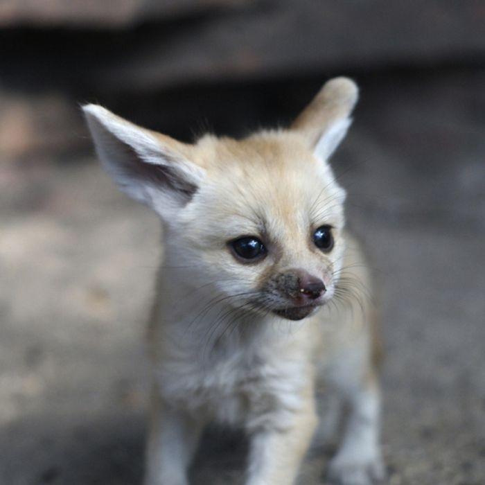 Best Baby животных Изображения год