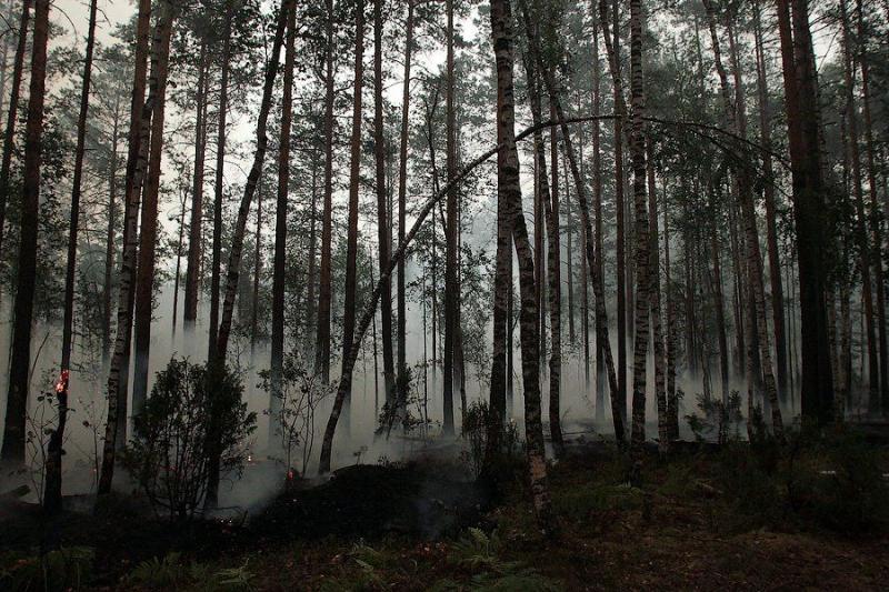 Extinguishing Wildfires 12