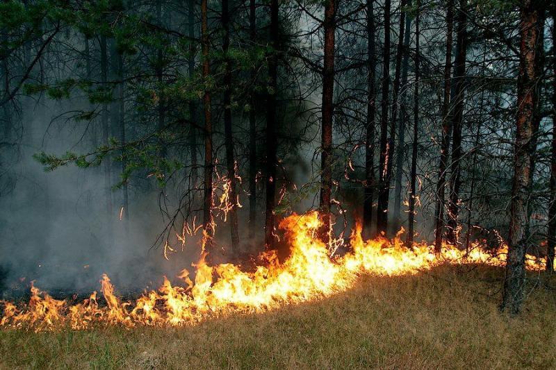 Extinguishing Wildfires 35