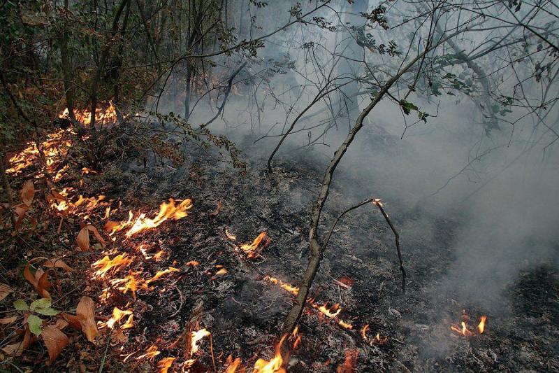 Extinguishing Wildfires 4