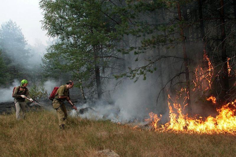 Extinguishing Wildfires 46