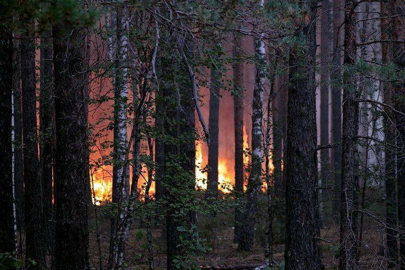 Extinguishing Wildfires 6