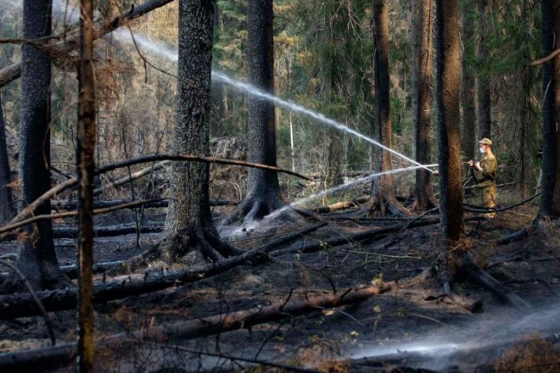 Extinguishing Wildfires 82