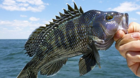 Climate change shrinks many fisheries globally, Rutgers-led study finds