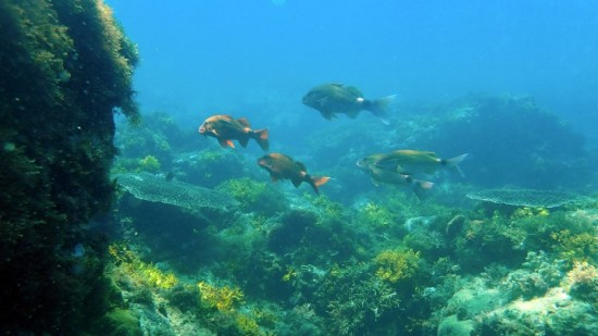 Ocean acidification 'could have consequences for millions'