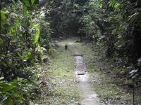 This image shows the typical fairy-like habitat of Tinkerbella nana (La Selva Biological Station, Costa Rica)