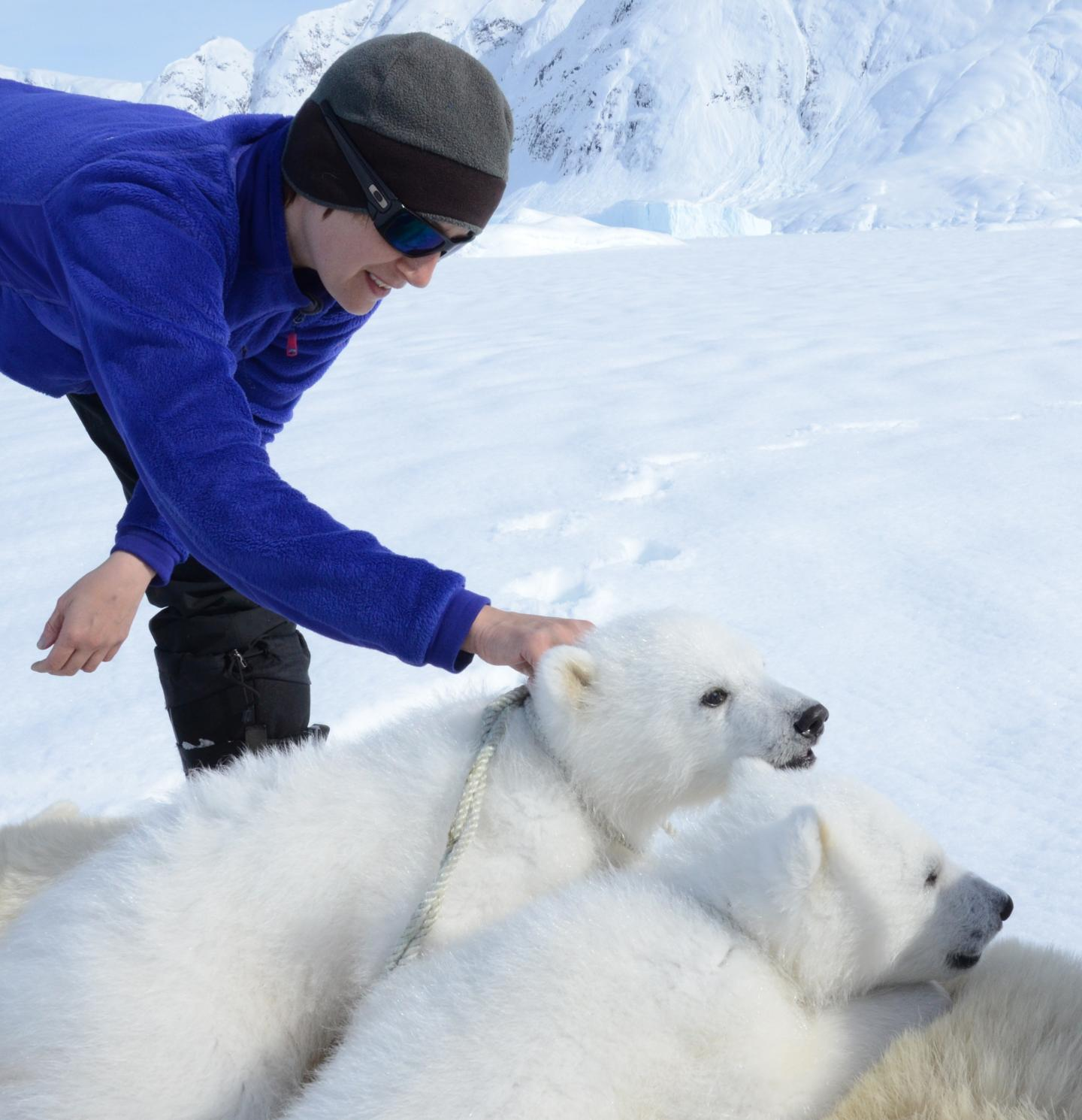 How Do Polar Bears Respond To Climate Change Subsistence