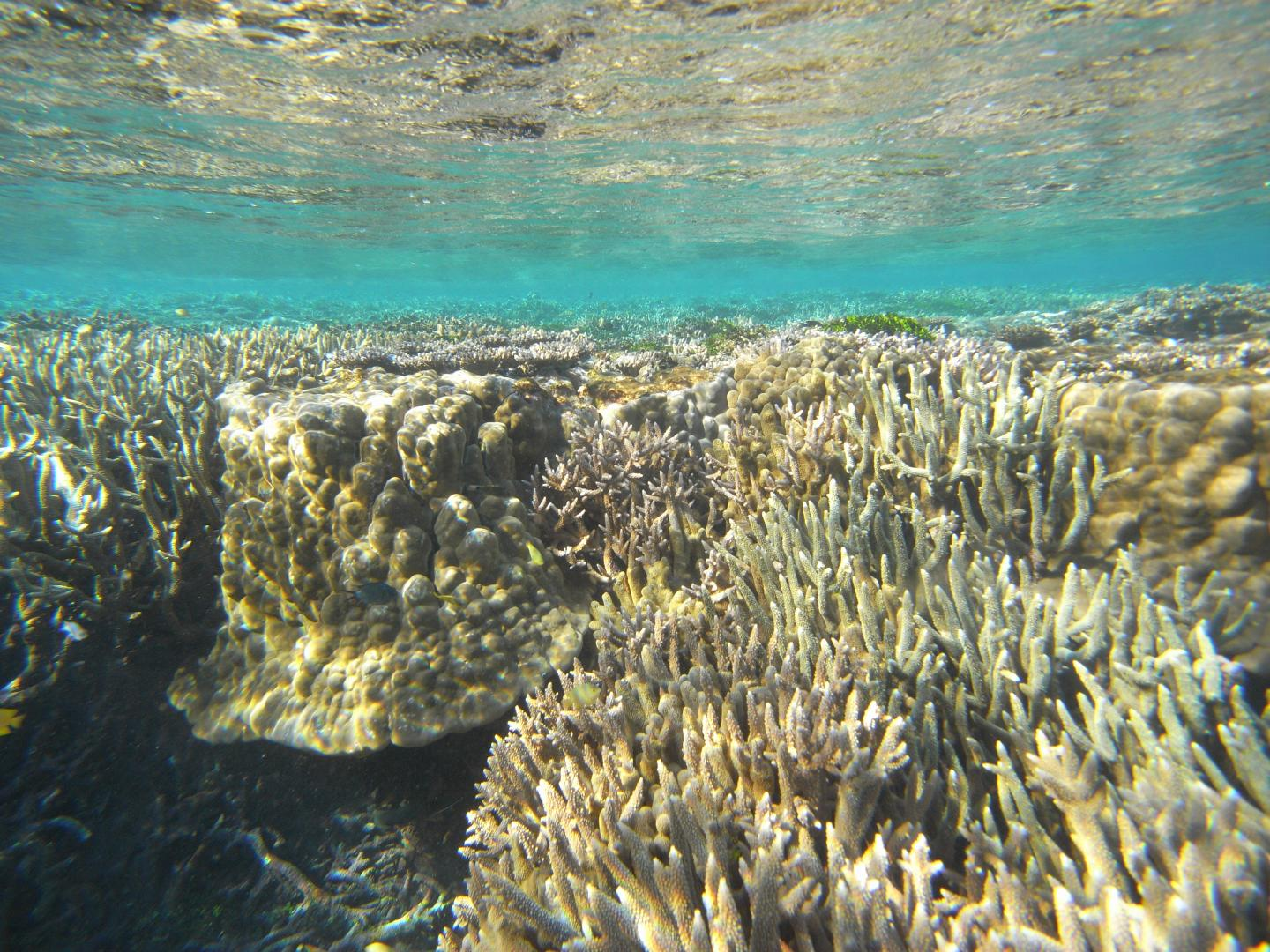 Great Barrier Reef Reveals Rapid Changes Of Ancient