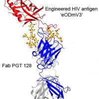 Scripps Research scientists reveal surprising picture of how powerful antibody neutralizes HIV