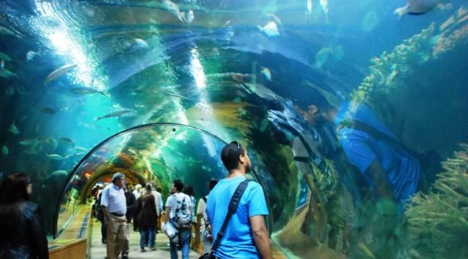Valencia-Aquarium