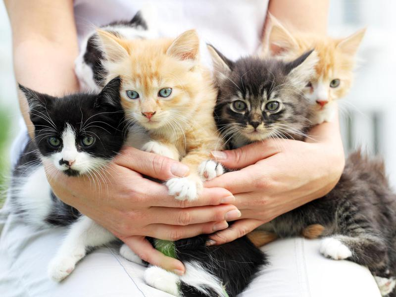 45 cat breeds with