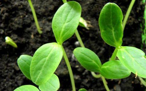 Små grukplantor