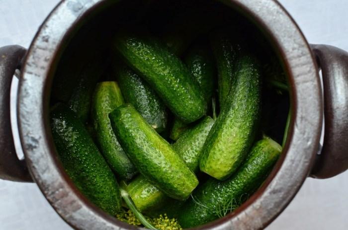 Syrad gurka Farbror Grön
