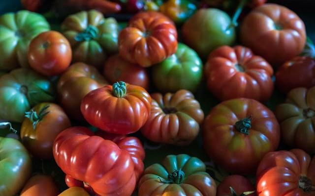 Tomatskörd Farbror Grön