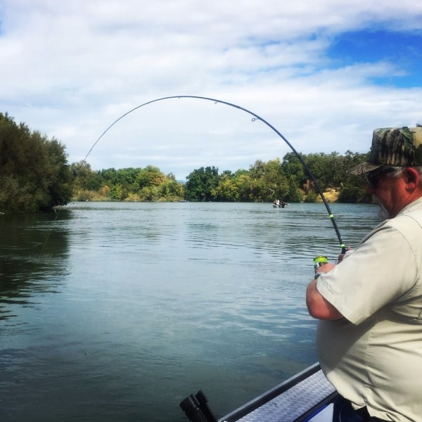 Sacramento River Fish Report CA