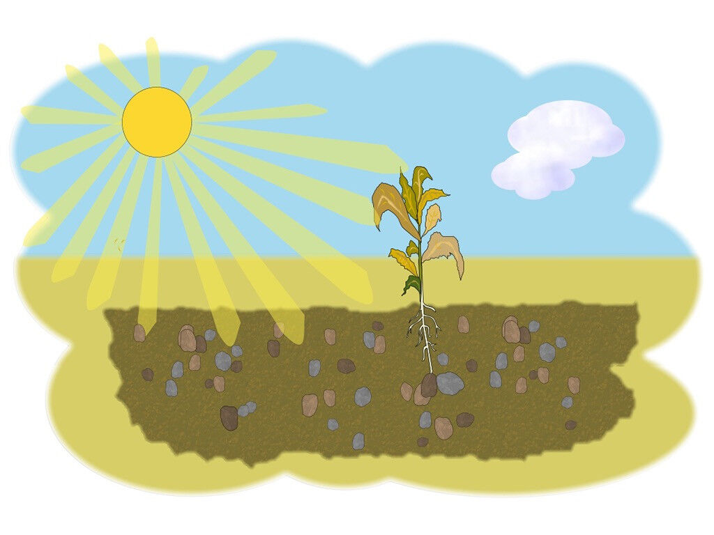 Bentley Fall Wallpaper Freebibleimages Parable Of The Sower For Young Children