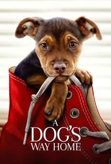 مشاهدة وتحميل فلم A Dog's Way Home طريق كلب إلى البيت اونلاين