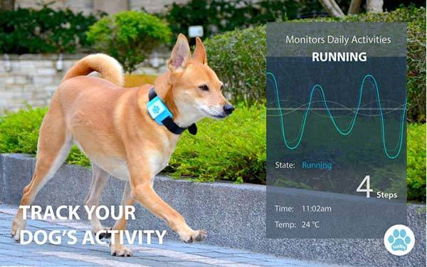 Lucky Tag is a Smart Tracking Device for Dogs  Gadgetsin