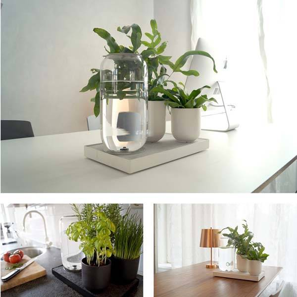 Tableau Automatic House Plant Watering Tray without