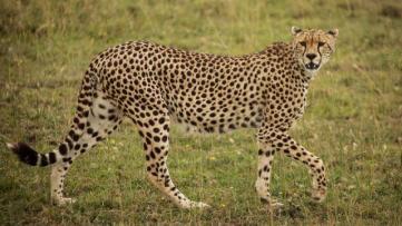 Tanzanya Safari Turu - 5 Gün ve Afrika Safari Turları