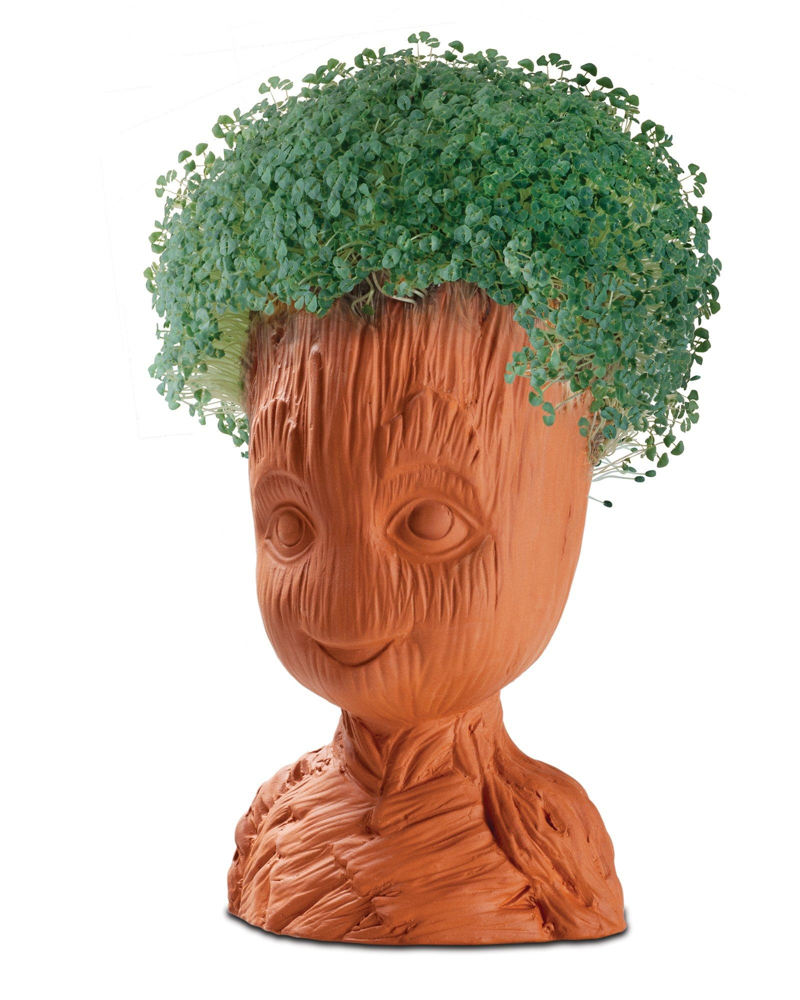 Chia Pet Images : images, Groot, GameStop