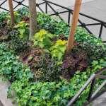 Hardscaping 101 Tree Beds Gardenista