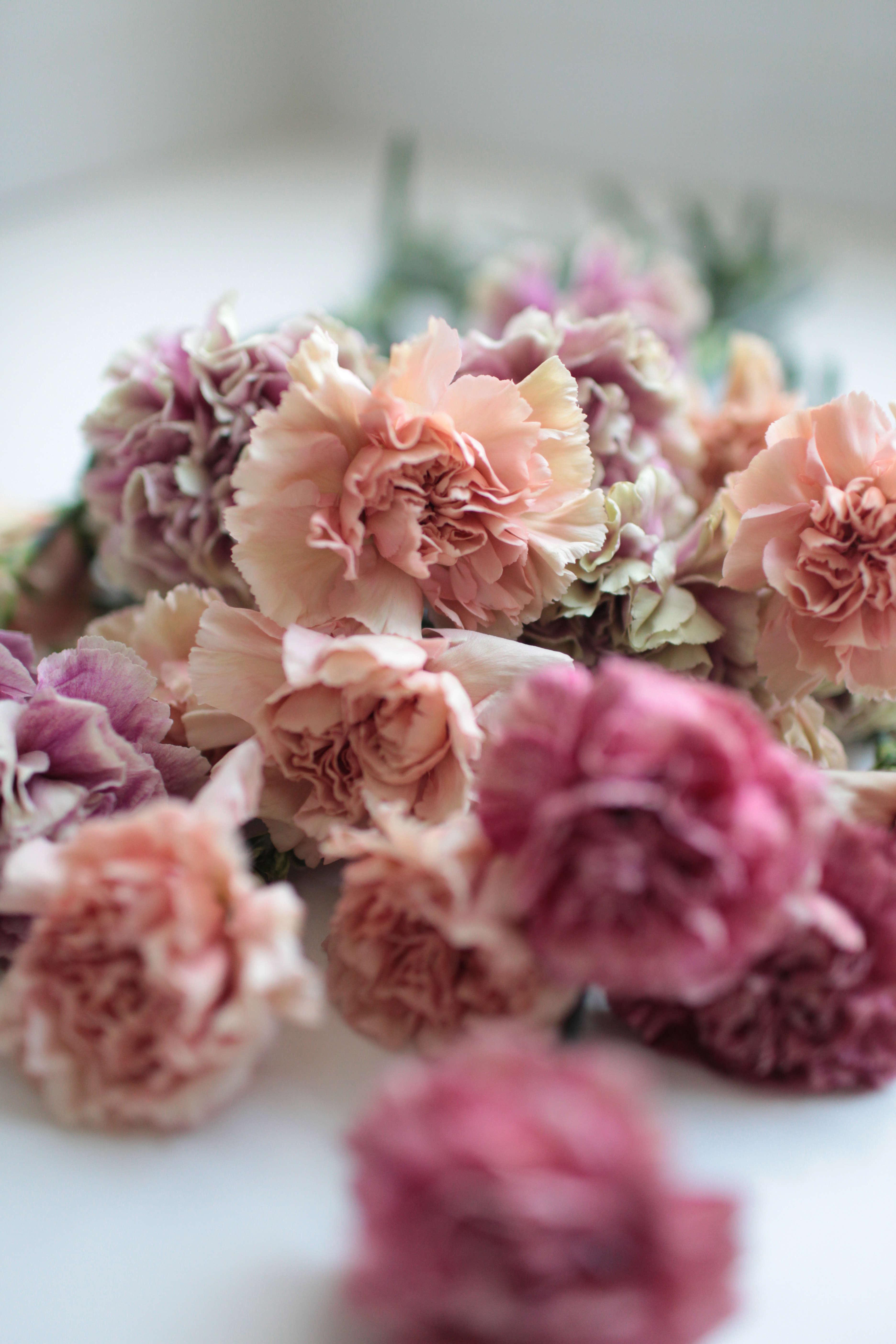 Pics Of Carnations : carnations, Carnations:, Rethinking, Supermarket, Flower, Gardenista