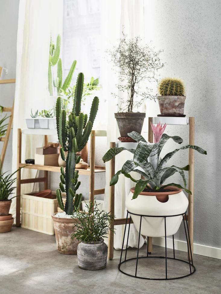 best ikea houseplants