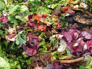 Compost : déchets de cuisine
