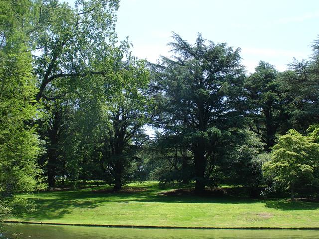 grands arbres choix d espece plantation