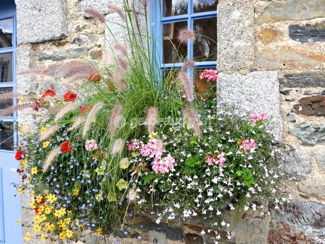 plantes pour jardinieres peu gourmandes