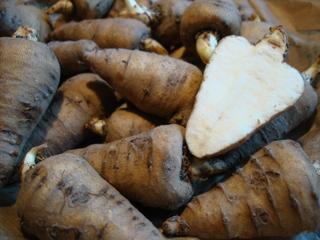 Cerfeuil tubéreux (Chaerophyllum bulbosum)