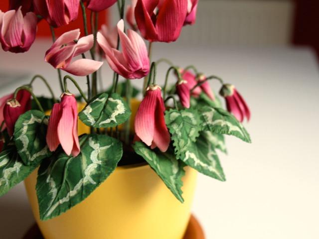 plantes d interieur fleuries et faciles