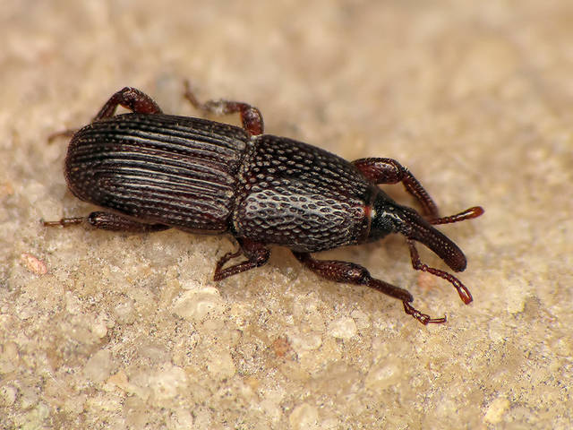 les insectes les plus courants dans la