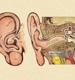 diagram of ear stock illustration [ 1024 x 819 Pixel ]