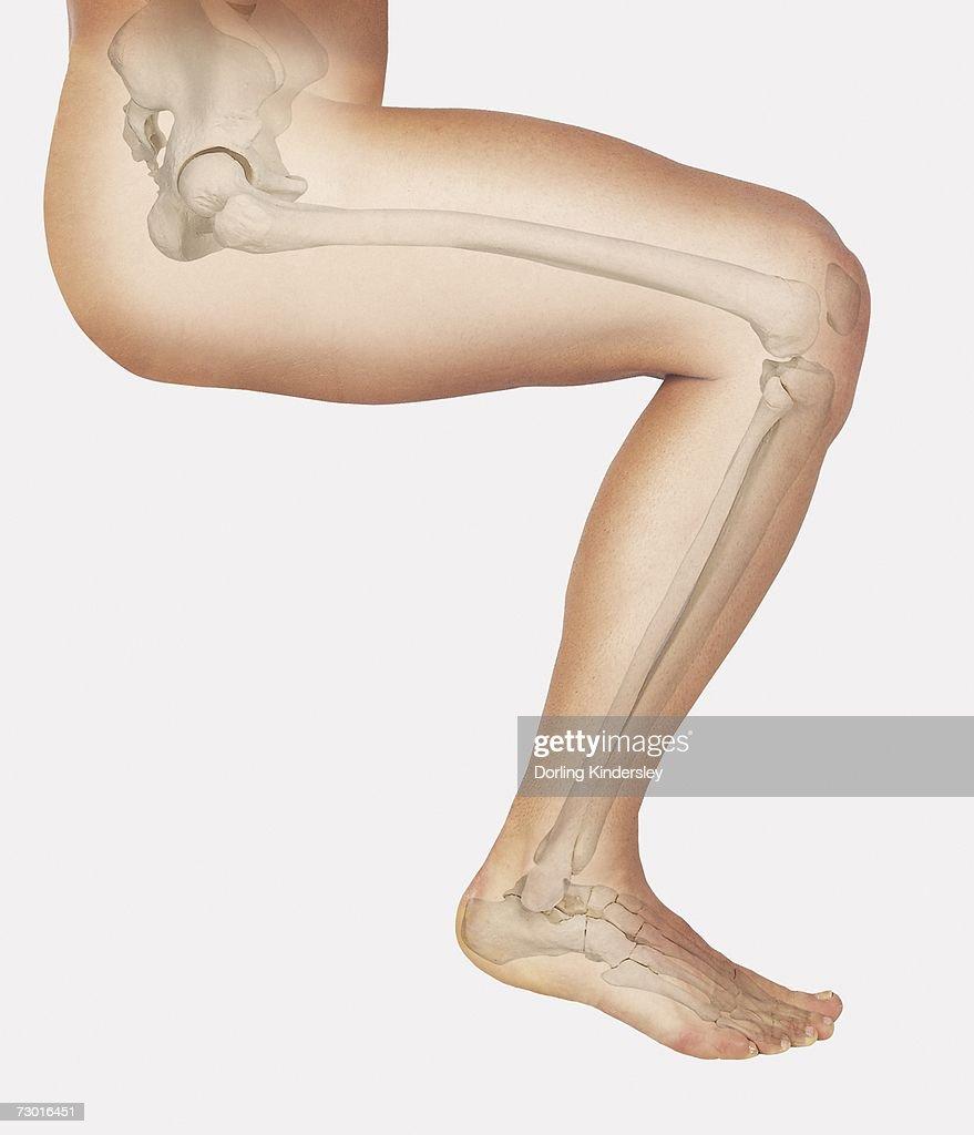 medium resolution of bent leg diagram wiring diagram query bent leg diagram