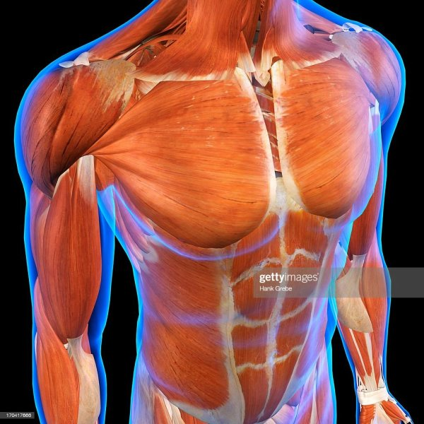 20 Images Abdominal And Chest Pictures And Ideas On Meta Networks
