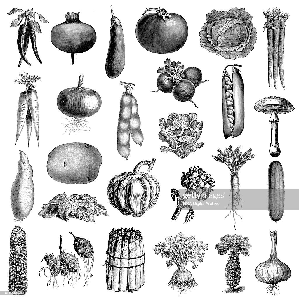 hight resolution of garden vegetable illsutrations antique farming and food clipart stock illustration