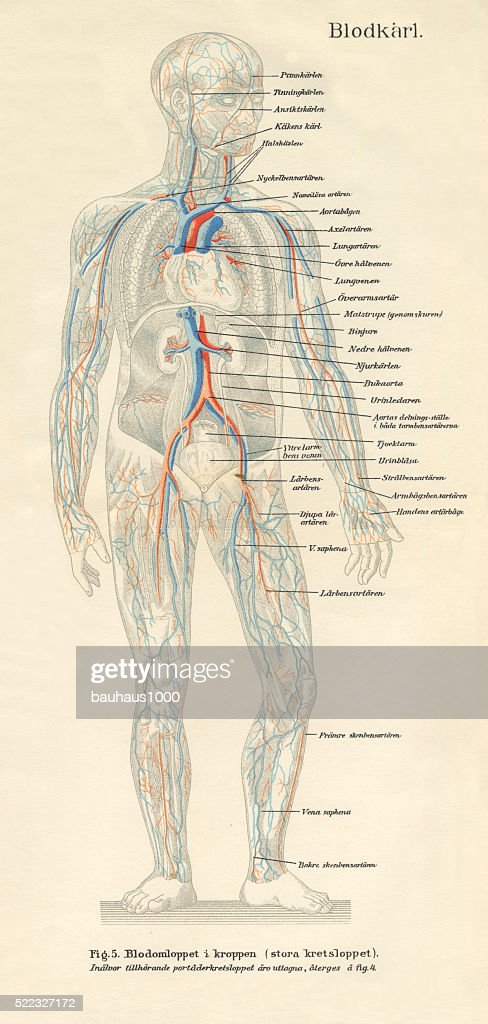Human Nervous System Stock Illustrations And Cartoons