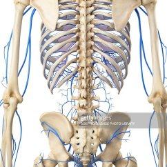 Human Vascular Anatomy Diagram 2009 Subaru Forester Stereo Wiring System Illustration Stock Getty Images