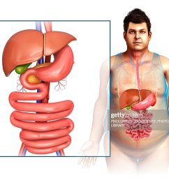 male digestive system illustration stock illustration [ 1024 x 782 Pixel ]