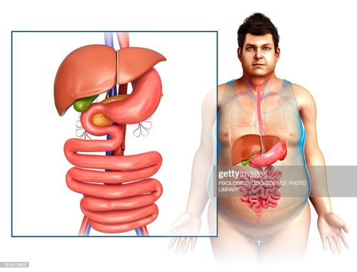 small resolution of male digestive system illustration stock illustration