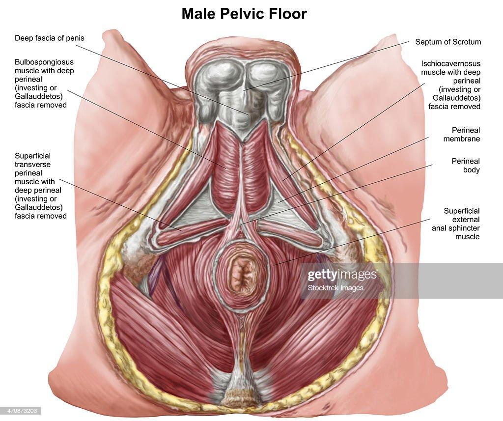 Pelvic Floor Dyssynergia