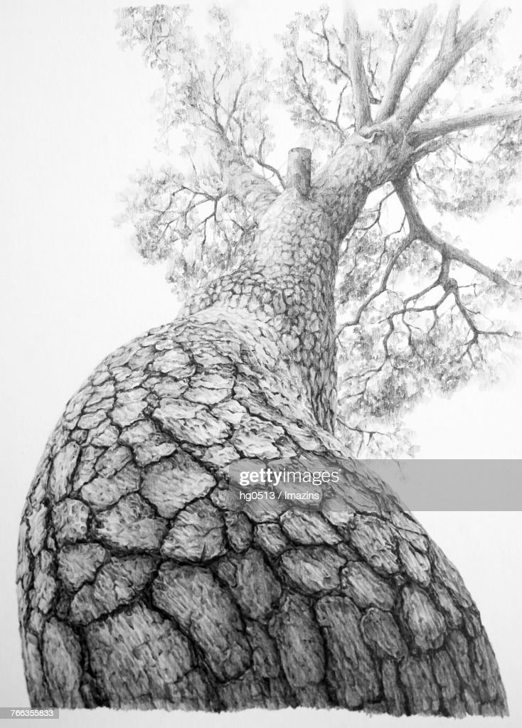 Pine Tree Pencil Drawing : pencil, drawing, Pencil, Drawing, High-Res, Vector, Graphic, Getty, Images