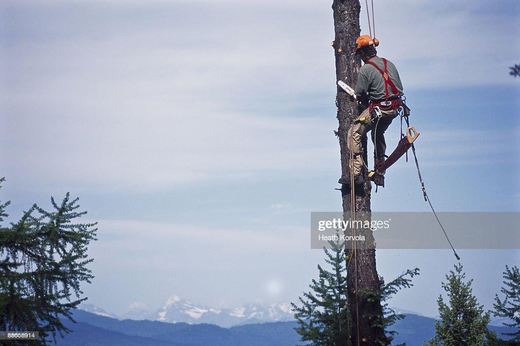 arborist high in tree
