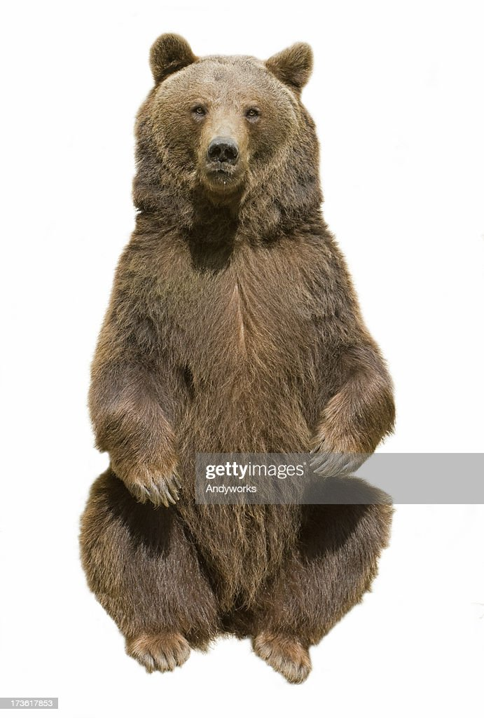 60 top bear pictures